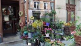 Schedretzky Blumen